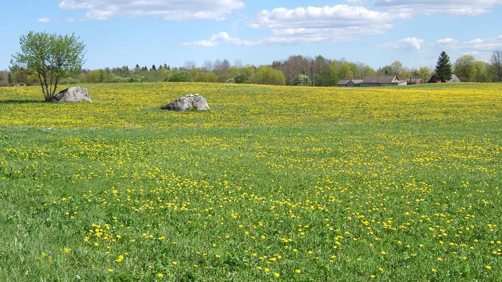 2007春カグマ
